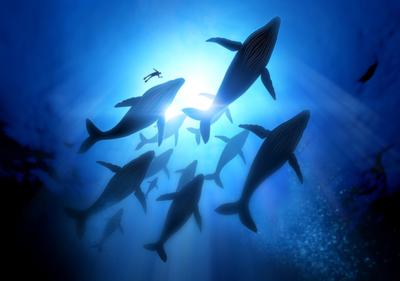 onderwater fotobehang walvis