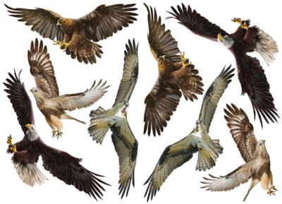 Roofvogel raamstickers