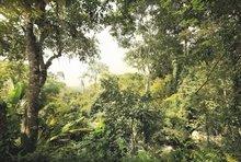 Jungle vliesbehang XL