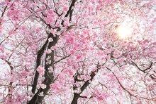 Fotobehang Bloom - Bloesem