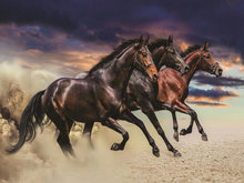 Paarden fotobehang L