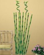 Bamboe muurstickers XL