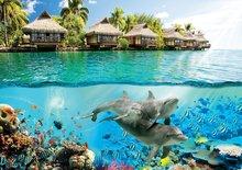 Onderwater behang Dolfijnen Hawaii