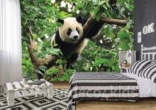 Panda vliesbehang