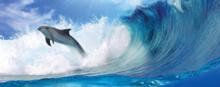 Dolfijnen poster behang H