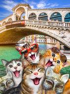 Katten behang Selfie Italië