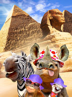 Selfie behang Jungledieren in Egypte